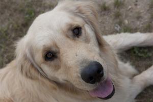 augie doggie-1